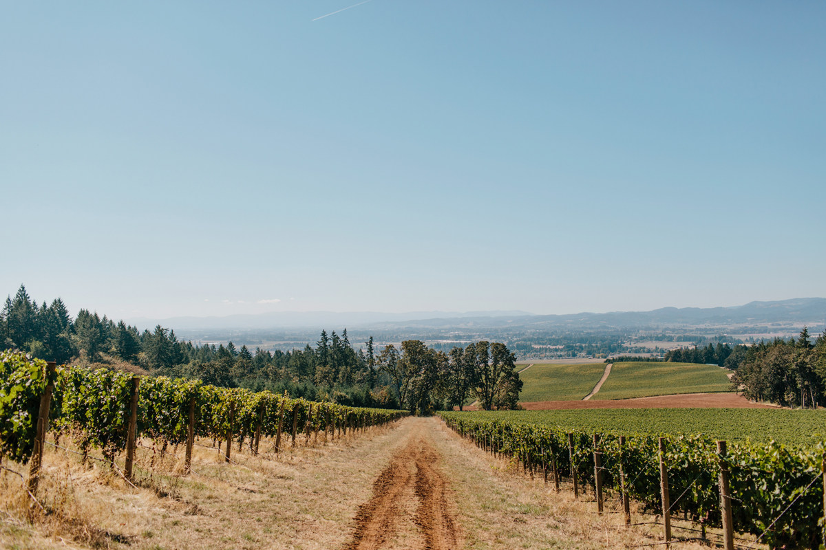 Vista Hills Vineyard Wedding 0130